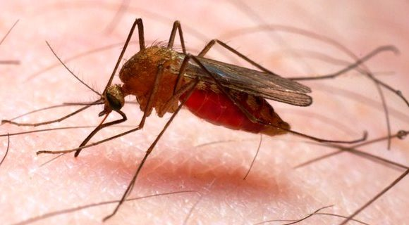 Suriname boekt historisch laag niveau aantal malaria gevallen